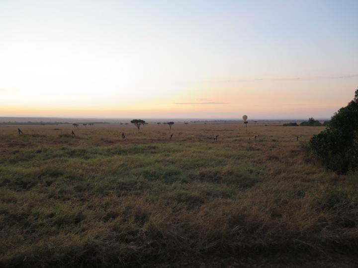 Sunrise across the Masai Mara and a Hot Air Balloon about to begin its ascent. Acacia trees dot the horizon.