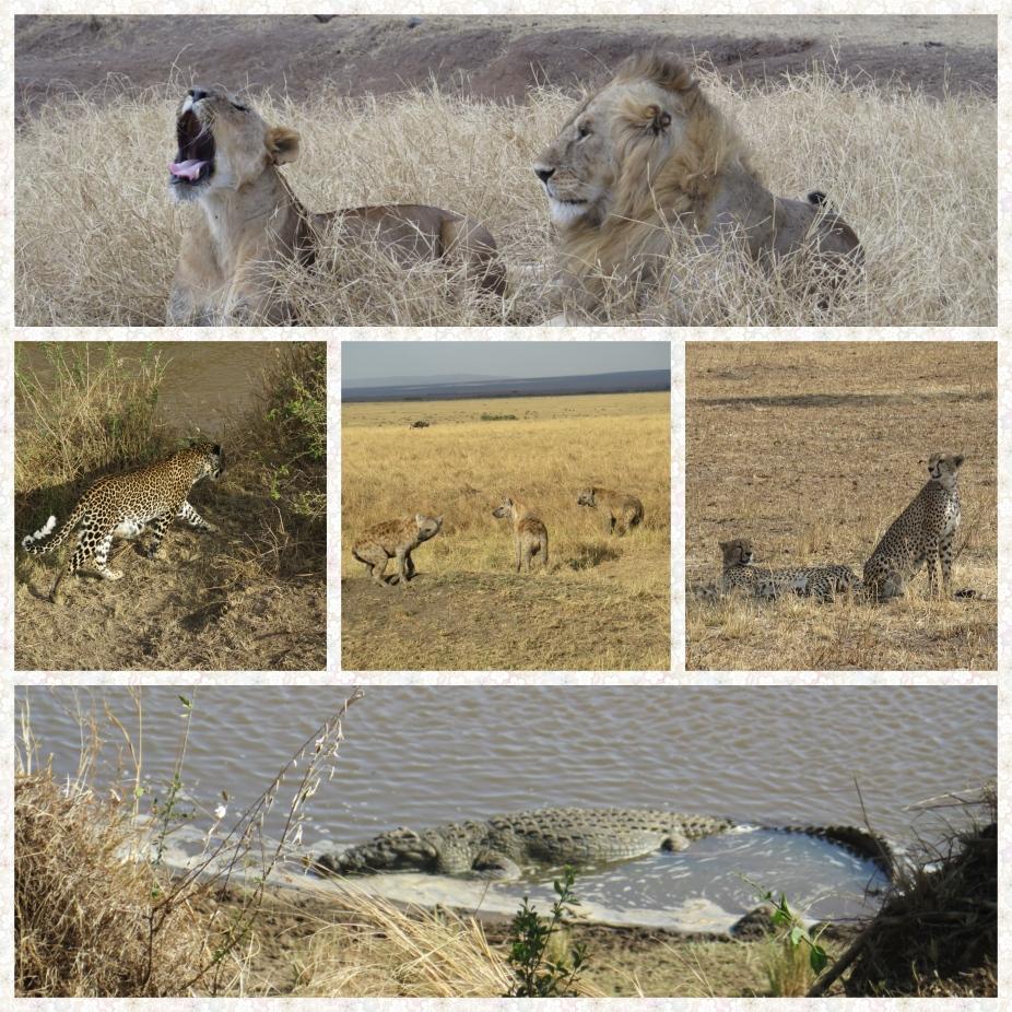All the predators - Lions, Leopards, Hyenas, Cheetahs and Crocodiles