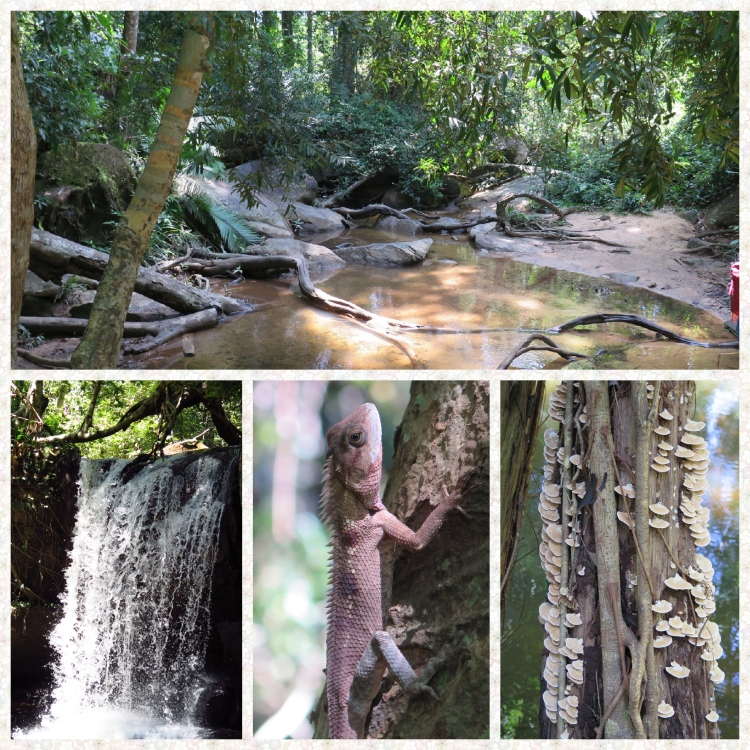 4 images of a rainforest stream, waterfall, a chamelon and tree mushrooms