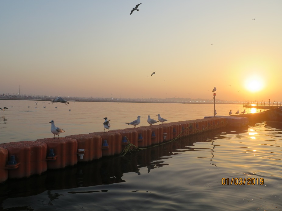 Gulls warming up on water barricades as the sun comes up lighting up the Sangam